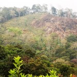 Dryland forests of Latin America
