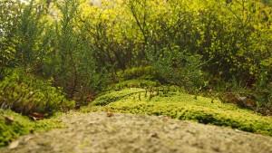 Biodiversity, Environmental Change and Green Economy