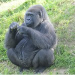 Going Ape: The inner primate in all of us