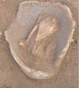 Ancient chicken bones identified by BU's Dr Ellen Hambleton