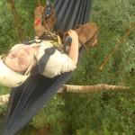 Jennifer Mark: Evaluating extinction risk of the world's timber tree species