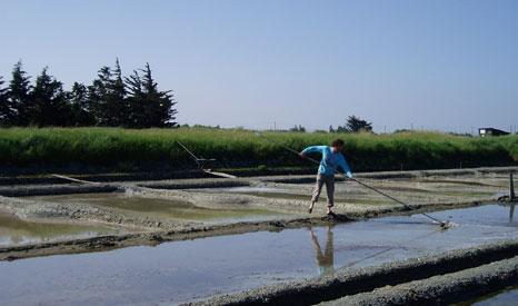 Man salt raking