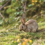 What rabbits can tell us about Neanderthal extinction?