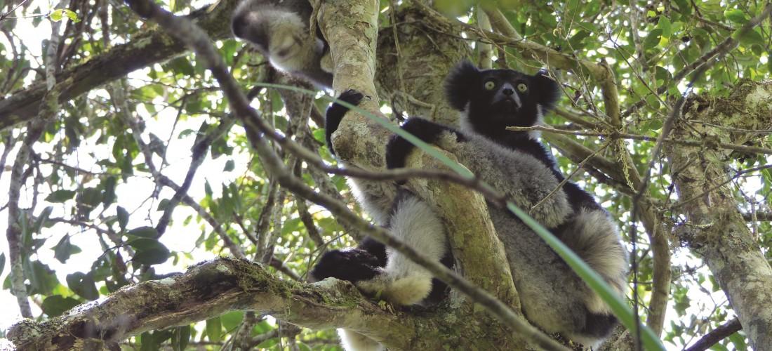 Anita - Madagascar