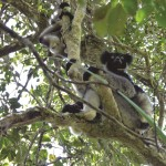 BU research team help to preserve Madagascar's plants and wildlife