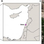 Present-day Lebanese descend from Biblical Canaanites, genetic study suggests